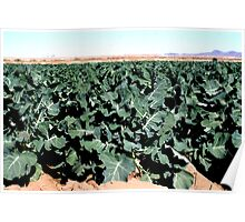 Broccoli...  Poster