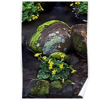 Marsh Marigolds in Forest Brook Poster