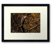 Among the Twigs Framed Print