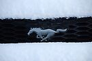 A Romp in the Snow by John Schneider