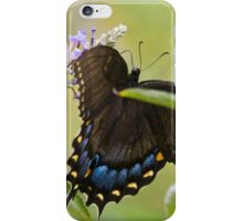 Eastern Tiger Swallowtail (Female) iPhone Case/Skin