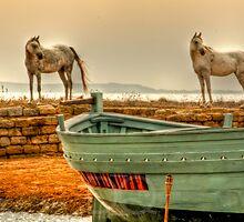 Arab Horses  by DianaQ