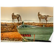 Arab Horses  Poster
