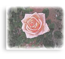 Rose Through Frosted Glass Canvas Print
