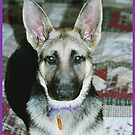 German Shepherd Puppy by Melissa Seaback