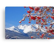 Snowy Mountain Ash Canvas Print