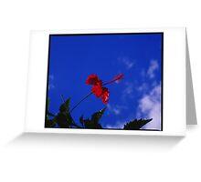 Hibiscus in VS Greeting Card