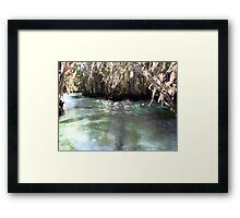 A Jewel in the Woods Framed Print