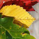 rasta leaves, rasta autumn. by pannapoziomka
