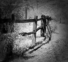 The Fence by Mike Lewis