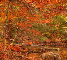 Just Above Oneida Falls by Aaron Campbell