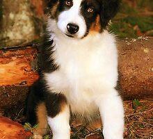 Wonder Dog by AmyKippernes