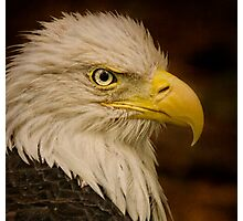 Giving You the Eagle Eye!! Photographic Print
