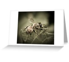Bee Macro Greeting Card