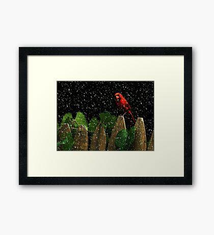 Male Cardinal Stare (snow effect) Framed Print