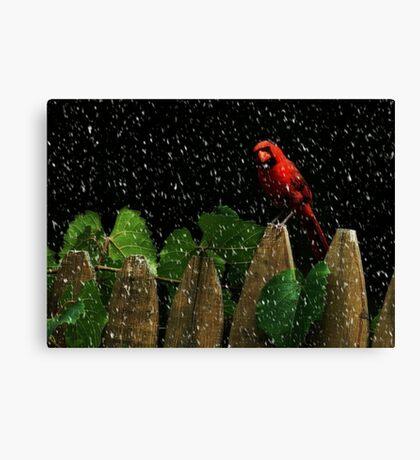 Male Cardinal Stare (snow effect) Canvas Print