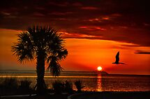 WON the &#39;Palm Trees at Sunset&#39; challenge of group &#39;World Wide Sunsets&#39;