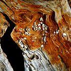 Barnacles On A Log by Bob Wall