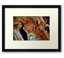 Barnacles On A Log Framed Print