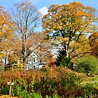 Autumn Scene by Barbara Manis