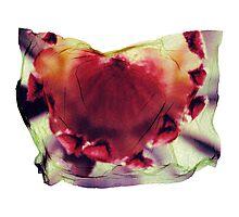 """Fluid Flower"" Photographic Print"