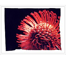"""""""Red Tentacle Flower"""" Photographic Print"""