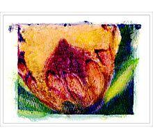 """Furry Flower"" Photographic Print"