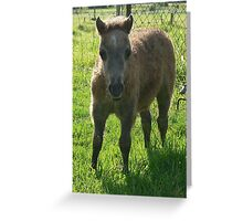 Mini Colt Greeting Card