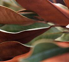 Bi-colored Leaves by Lynn Wiles