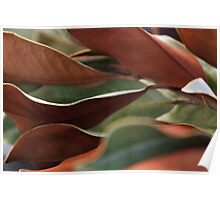 Bi-colored Leaves Poster