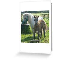 Mini Mare & Colt Greeting Card