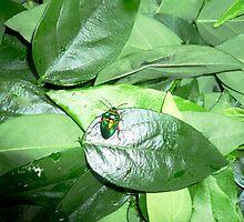 Sweetleaf Greens & Beetle by D. D.AMO