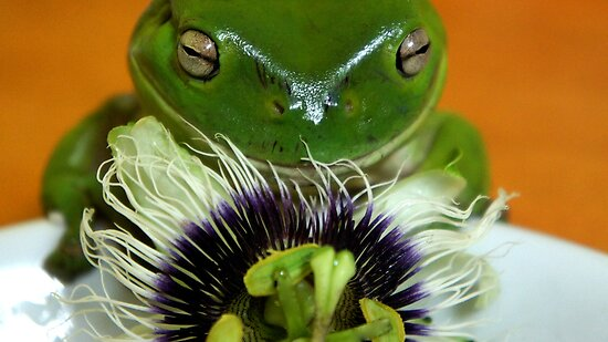 I LOVE Passiflora! by D. D.AMO