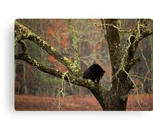 Stay Down Canvas Print
