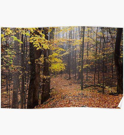 Foggy Fall Walkway Poster