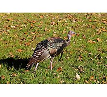 Tom T. Turkey Photographic Print