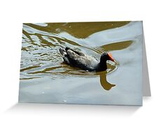 Swimming Swamp Hen Greeting Card