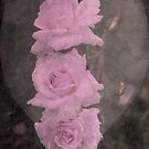 roses in a heart by julie anne  grattan