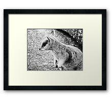 Mareeba Rock Wallaby Framed Print