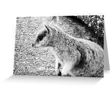Mareeba Rock Wallaby Greeting Card