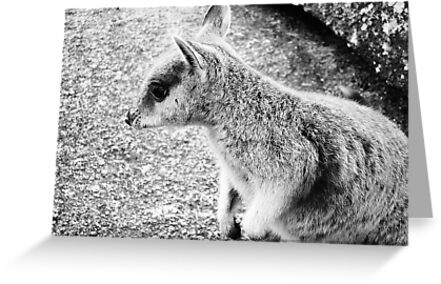 Mareeba Rock Wallaby by Rossman72