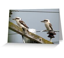 Kookaburras on power lines 2 Greeting Card