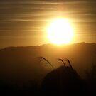 Winter Golden Scottish Sky by sarnia2