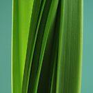 Natural Lines by Celia Strainge