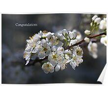 Designer Living In Spring Poster