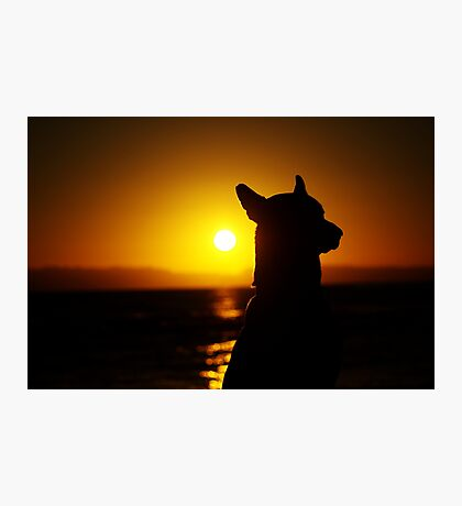Faithful Companion Photographic Print