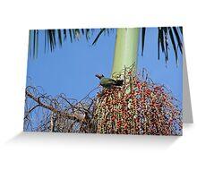 A male fig bird Greeting Card