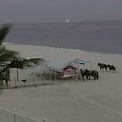 Horses on the beach by the ocean by photobylorne