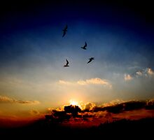Four Gulls and a sunset  by larry flewers