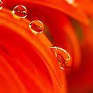drops on edge by lensbaby